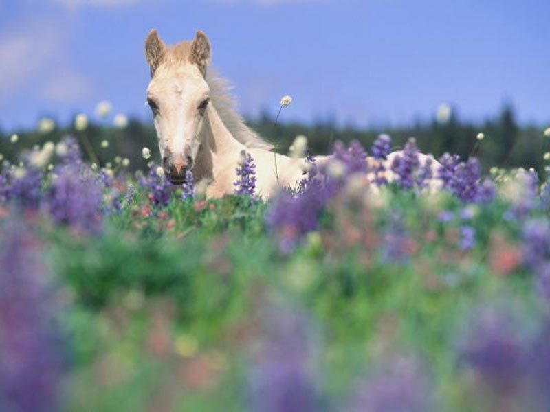 horses and flowers wallpaper - photo #23